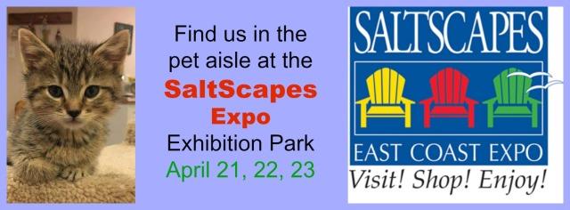 SaltScapes banner