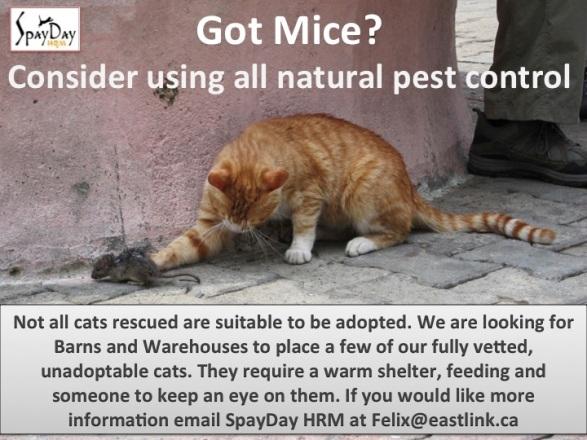 mice poster