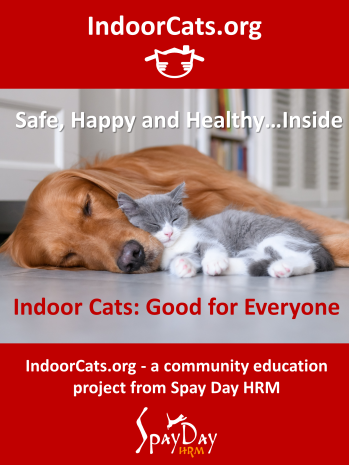 Intro poster Indoor Cats