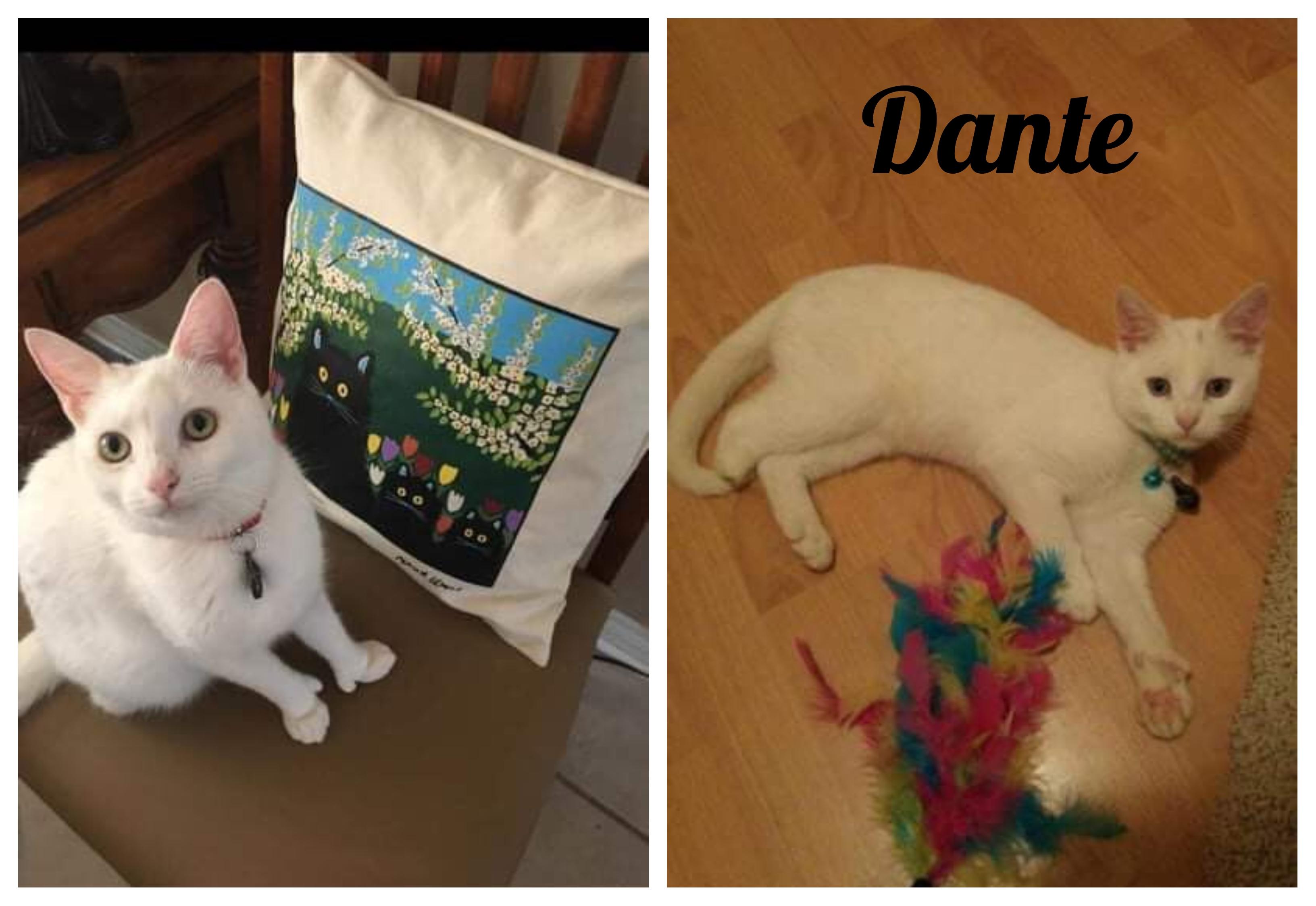 Dante collage